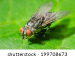 fly on a green leaves | Shutterstock . vector #199708673