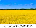 nice rape field   yellow and... | Shutterstock . vector #200514293