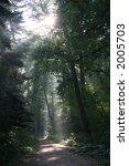 mysterious sunlight in a dutch... | Shutterstock . vector #2005703