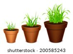Three terracotta pots with growing grass.