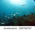a huge school of jack fish... | Shutterstock . vector #200706707