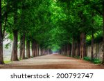 Damyang Metasequoia Road. Take...