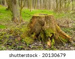 Photo Of Stump And Autumn In...