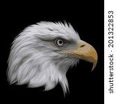 the head of a bald eagle ...
