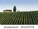 Vineyards In Tuscany. Farm...