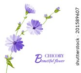 Blue Chicory Flowers Isolated...