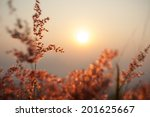 the flower with sunlight | Shutterstock . vector #201625667