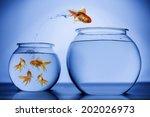 gold fish | Shutterstock . vector #202026973