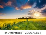 fantastic field at the dramatic ... | Shutterstock . vector #202071817