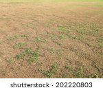 Green Grass And Dry Grass