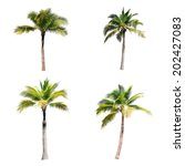 4 of coconut trees on white... | Shutterstock . vector #202427083