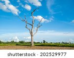 Dead Tree On Blue Sky Background