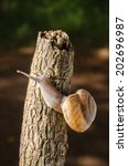 snail crawling on the bark... | Shutterstock . vector #202696987
