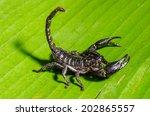 scorpion. | Shutterstock . vector #202865557