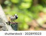 Tiny Sparrow On Wooden Fence