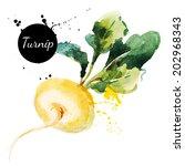 turnip. hand drawn watercolor... | Shutterstock .eps vector #202968343