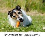a parson jack russell terrier... | Shutterstock . vector #203133943