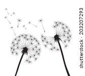 black vector dandelions on... | Shutterstock .eps vector #203207293