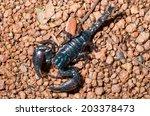 scorpion. | Shutterstock . vector #203378473