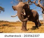 elephant | Shutterstock . vector #203562337