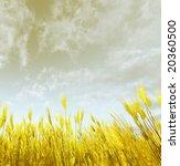 wheat field | Shutterstock . vector #20360500