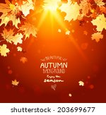 beautiful shining autumn... | Shutterstock .eps vector #203699677