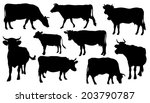 cow silhouettes on the white background - stock vector