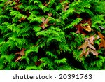 autumn leaves | Shutterstock . vector #20391763