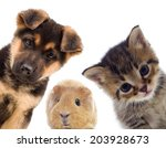puppy and kitten and guinea pig    Shutterstock . vector #203928673