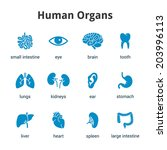 blue medical human organs icon... | Shutterstock .eps vector #203996113