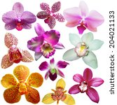 collection of orchid flower... | Shutterstock . vector #204021133