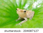 a tiny frog is perched on a... | Shutterstock . vector #204087127