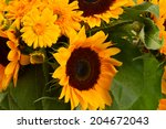 Posy Of Mixed Sunflowers And...