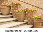 Ceramic Pots With Geranium