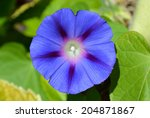 Large Blue Flower With...