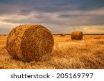 Harvested Field With Straw...