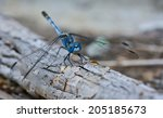 Macro Of Blue Dragonfly ...