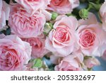 Stock photo pink roses 205332697
