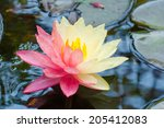 Lotus Mutant With Two Colors I...