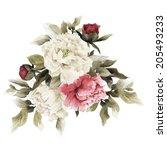 bouquet of peonies  watercolor  ... | Shutterstock . vector #205493233