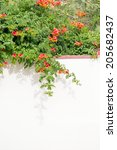 campsis radicans   plant with... | Shutterstock . vector #205682437