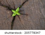 young plant growing on tree... | Shutterstock . vector #205778347