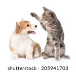 Stock photo cat and dog fight isolated on white background 205941703