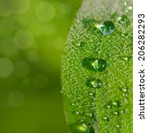 tiny water drops on a single... | Shutterstock . vector #206282293
