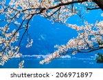 cherry blossom in arashiyama ... | Shutterstock . vector #206971897