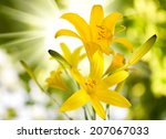 image of lilies flower against...   Shutterstock . vector #207067033
