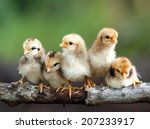 cute babies birds on branch tree | Shutterstock . vector #207233917