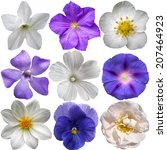blue and white flowers isolated ... | Shutterstock . vector #207464923