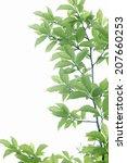 fresh green leaves and sunshine ... | Shutterstock . vector #207660253