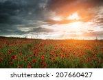 Beautiful Poppy Field Landscap...